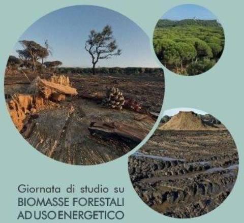 Risultati immagini per Biomasse Forestali ad uso energetico: aspetti ambientali, forestali, giuridici, economici e sanitari vedi