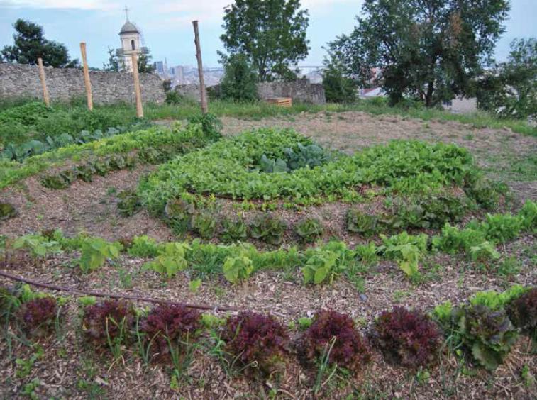 L 39 orto sinergico le origini l 39 esperienza la pratica - L orto in giardino ...