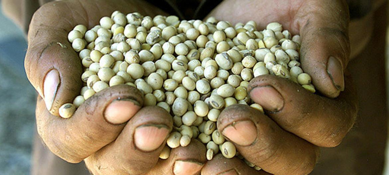 Risultati immagini per bioregionalismo scambio di semi