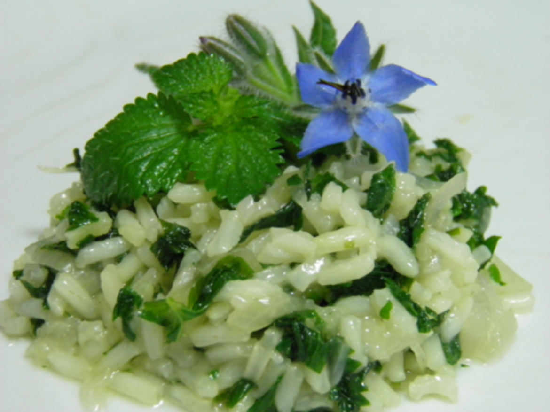 risotto alle ortiche con foglie e fiori di borragine - terra nuova - Ortiche In Cucina
