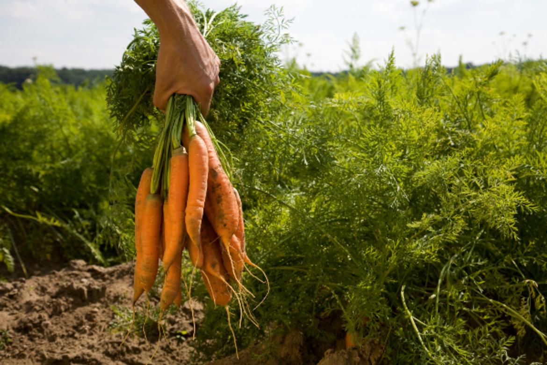 L'alternativa dell'agricoltura contadina come garanzia di sopravvivenza ecologica