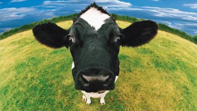 Produzione del proprio cibo e l'alimentazione bioregionale - Terra ...