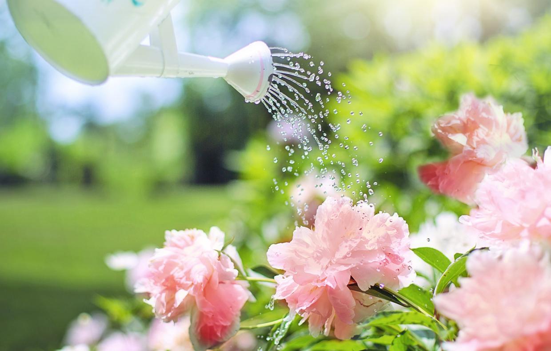 Tronchetto Della Felicità Da Esterno come prendersi cura delle piante: l'annaffiatura - terra nuova