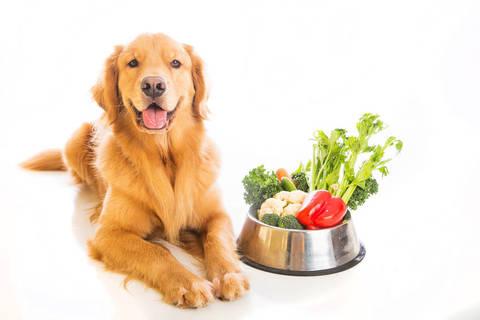 dieta povera di sale e di grassi animali
