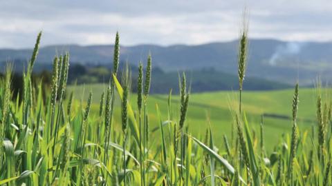 Le antiche variet di grano tornano a tavola terra nuova - Le virtu in tavola ...
