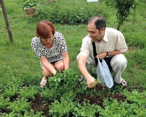 Omeopatia e piante