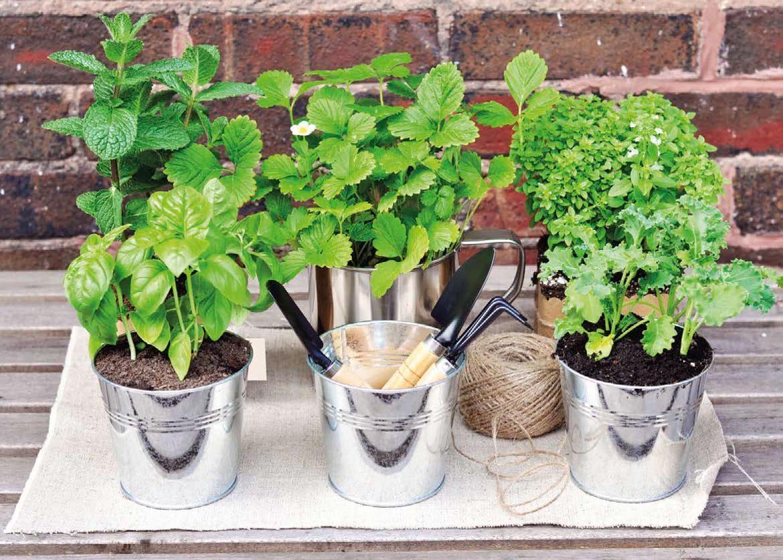 Piante aromatiche: le alleate in cucina - Terra Nuova