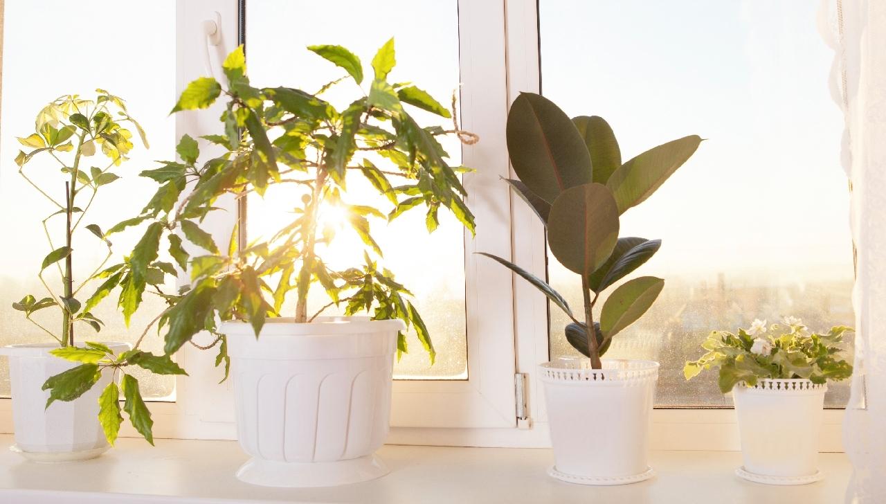 Piante che puliscono l aria terra nuova - Piante che purificano l aria in casa ...