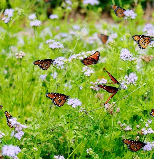 Farfalline; formiche&c: come dire addio agli insetti ...