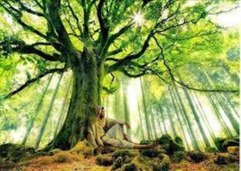 Risultati immagini per Bioregionalismo o spiritualità laica