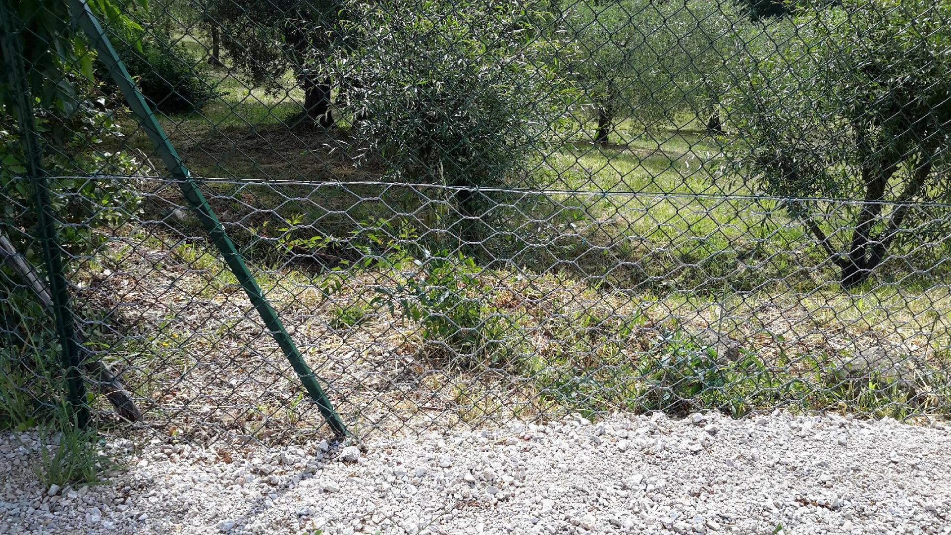 Recinzioni e reti per difendere l 39 orto e le piante dagli for Recinto giardino fai da te