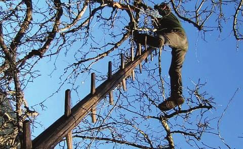 Trapianto e potatura degli alberi da frutta terra nuova for Prezzi alberi da frutta