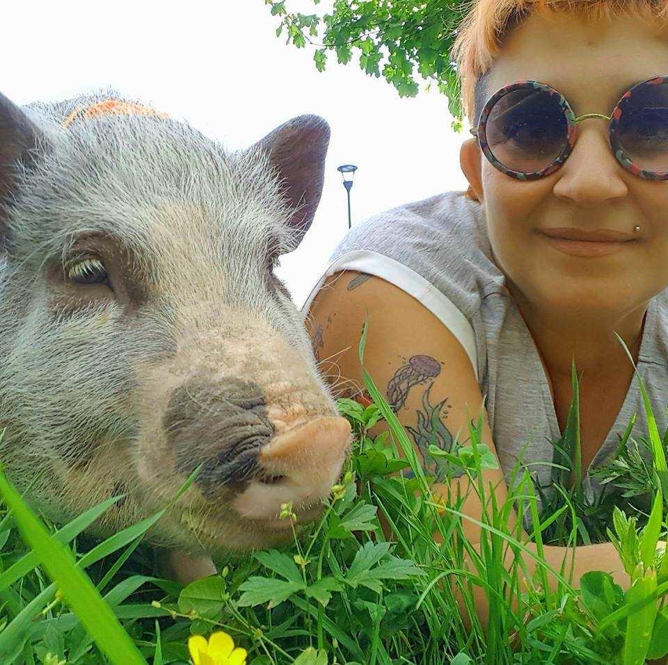 Elvis un maiale in casa ti cambia la prospettiva terra nuova - Maiale sul divano ...