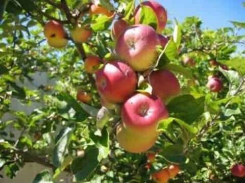 Calendario Trattamenti Frutteto.Il Frutteto Senza Pesticidi Terra Nuova