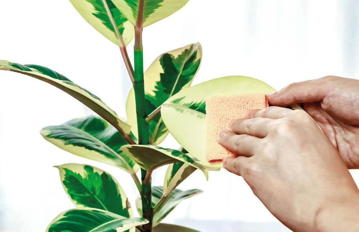Come Curare Le Piante senza veleni: curare le piante da appartamento con i rimedi