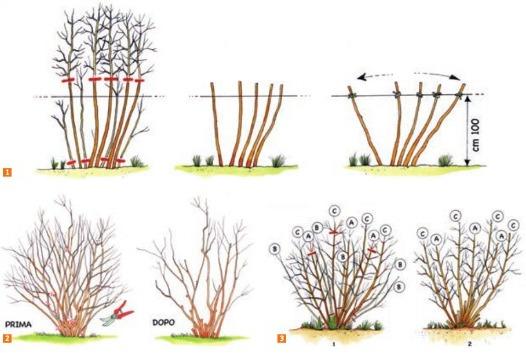 Febbraio i lavori nell 39 orto e nel giardino terra nuova for Piantine orto prezzi