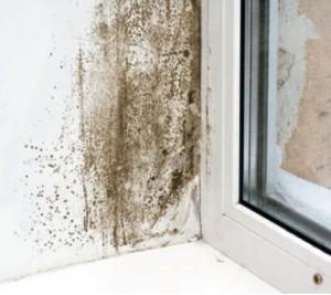 Lotta all umidit terra nuova - Muffa in casa nuova ...