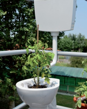 terrazza Vasi disegno : orto sul balcone - Terra Nuova