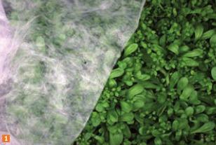 I lavori nell 39 orto e nel giardino a ottobre terra nuova - Telo tessuto non tessuto giardino ...