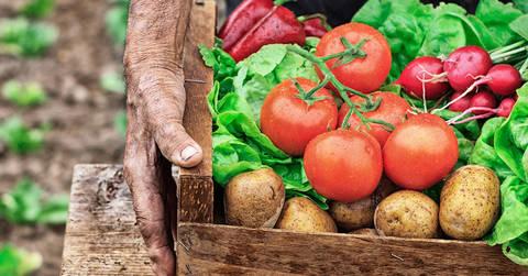 Agricoltura biodinamica, un convegno per la difesa della