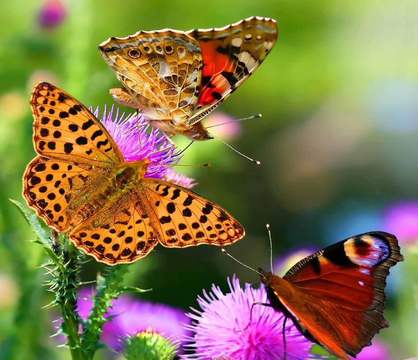 Come Fare Un Giardino Inglese come fare un giardino per le farfalle - terra nuova