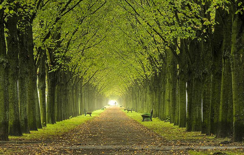Giornata nazionale degli alberi terra nuova for Foto di alberi da colorare
