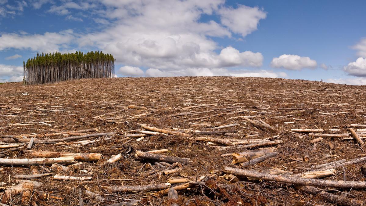 Risultati immagini per decreto ammazza foreste