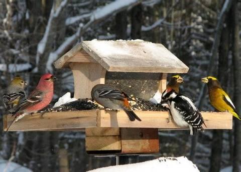 Come Fare Una Mangiatoia Per Gli Uccellini Selvatici