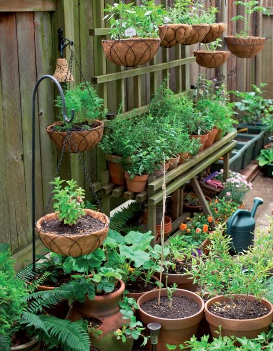 L orto sul balcone terra nuova for Vasi per balcone