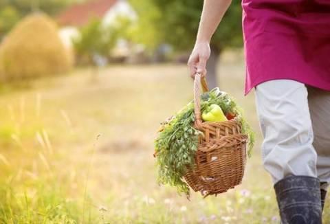 Risultati immagini per agricoltura organica
