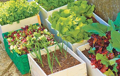 orto sul balcone grande boom ma le verdure sono sane. Black Bedroom Furniture Sets. Home Design Ideas